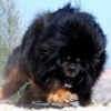 Kłopot z bobrami - ostatni post przez Mastif